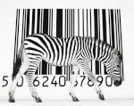 Réplica du Zebre