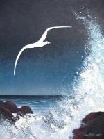 albatrosdore