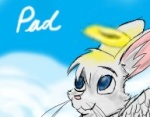Pad the bunny