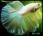 BillHN