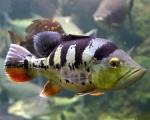 fishNAbowl