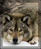 wolgart