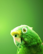 Green_Emma