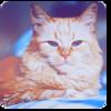 Марина Cat