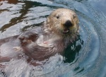 Otterfire
