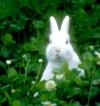 RabbitInTheMoon