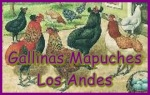 Aves Mapuches Los Andes