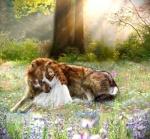 wolf girl alpha 98