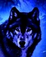 Wizard Wolf