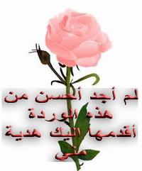 زهرة المغرب