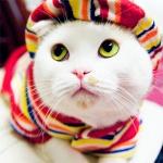 القطة البيضاء