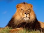 lion19800