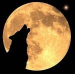 Lobo-Wild Hogs