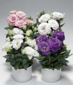 floristmariupol