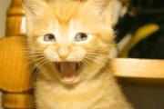 gato lol