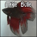 Mikie Bulle