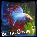 Betta-Corne ♀