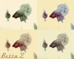 Betta Z