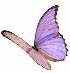 papillon81