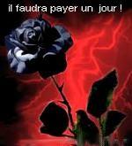 rose.noire