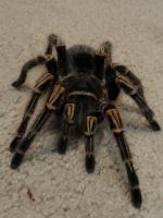 arachnophile223