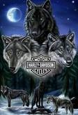 Wolf 17