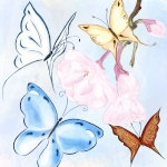 butterfly_h