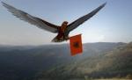 Zog i Shqipes