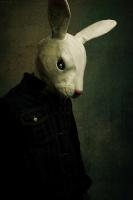 the*white*rabbit