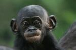 [FW] Bonobo