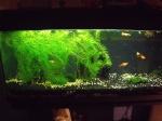 aquariofan80