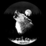Loup_Gris