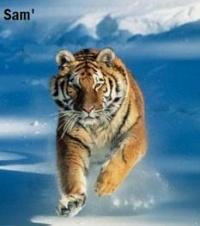 Samraemi