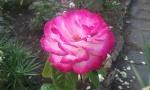 Fleur Martin