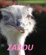 Zabou P