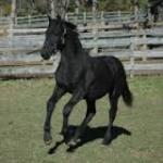 Free forum : Horse Island 18-90