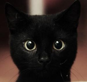 kucinghitam17