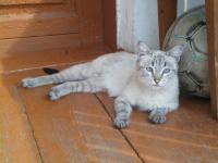 Kitten81