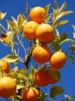 portokalimu