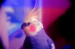 littletiel