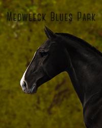 Medweeck Blues Park
