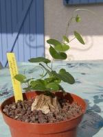 Les autres plantes... 291-4