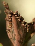 Les autres plantes... 685-94