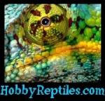 Hobbyreptiles.com