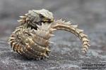 Reptil11