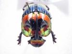 entomophyl