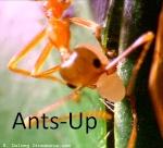 Ants-Up