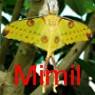Mimil