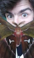Aubin Insectes