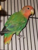 prettybird